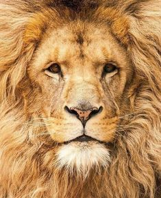 2018/01/15 Lion