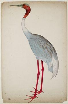 Sarus Crane by Shaikh Zain ud-Din, India (Kolkata), Mughal, c. 1770 - 1785.  Gouache on paper.