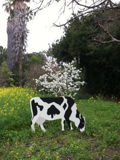 """Plywood Cow! Easy and fun project, find a picture, enlarge onto 3/4"""" plywood using a grid pattern, cut out and paint, attach 2 rebars on the back to stake into the ground. Now you have a cow to graze in your yard!"""