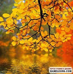 Őszi táj - őszi erdőben - fotó    Őszi táj
