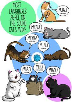 Les cris des animaux dans les autres langues
