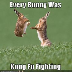 You know the song everybody was kung fu fighting? Well know every BUNNY was kung fu fighting! Humor Animal, Funny Animal Memes, Cute Funny Animals, Funny Animal Pictures, Funny Memes, Animal Puns, Funny Easter Pictures, Cute Animal Quotes, Rabbit Pictures
