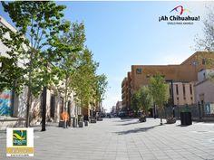 Dentro de la zona comercial y financiera de Chihuahua, se encuentra estratégicamente ubicado nuestro HOTEL QUALITY INN CHIHUAHUA, en la calle de Victoria # 409 Col. Centro. Somos una excelente opción para hospedarse sin alejarse de la zona. Tenemos todos los servicios como nuestro restaurante donde se preparan estupendos platillos o si prefiere hacer ejercicio contamos con un estupendo gimnasio. Informes y reservaciones en nuestra página. http://www.qualityinnchihuahua.com/
