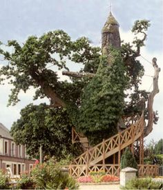 I LOVE TREE HOUSES! The Chapel-Oak is the biggest, oldest, and the most famous tree of France. The tree is a religious monument and an object of pilgrimage. There are two small chapels built in it. Weird Trees, Cool Tree Houses, Amazing Houses, Fairy Houses, Old Trees, Bizarre, Chapelle, In The Tree, Big Tree