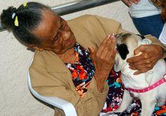 Projeto Pêlo Próximo: seleção para novos cães terapeutas