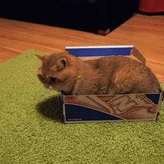 Cats are liquid #cat