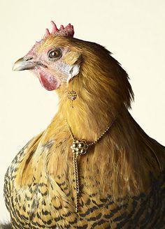 Portrait of a hen wearing jewels #chicken #hen #gallina #gioielli - Carefully selected by GORGONIA www.gorgonia.it