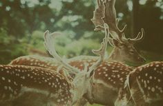 Deer Woods