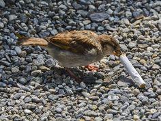 animals-recycle-green-bird-cigarette-02.jpg (2048×1536)