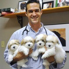 More precious Coton de Tulear puppies from Snowflower Cotons...visiting their vet...who's, dare I say, also quite the cutie. :0