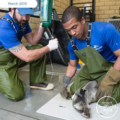 Dedicated members of SeaWorld's animal care team constantly monitor rescued pups' health and behaviors to ensure their successful recoveries during the #2015SeaLionCrisis. #365DaysOfRescue