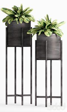 3d модели: Растения - PLANT -21
