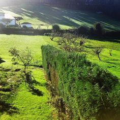#Green #Asturias