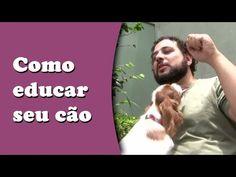 Como educar seu cão - Dicas de adestramento - YouTube