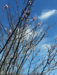Forår på Langø