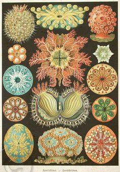 Antique vintage Marine Sea Life Print, Etsy