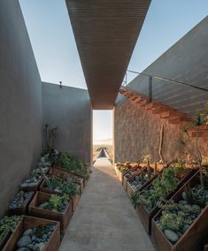Santos Bolivar has placed red-block buildings atop reflective bottoms to make it seem like they float above the arid landscape in Valle de Guadalupe. Baja California, Wooden Terrace, Small Courtyards, Soil Improvement, Rammed Earth, Geodesic Dome, Bed And Breakfast, Countryside, Patio