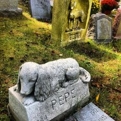 Left No Ball Unchased: Endearing Epitaphs in America's Oldest Pet Cemetery