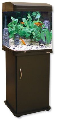 The Aquastyle aquarium systems from Aqua One are the epitome of design style. The curved glass to the front corners an extremely popular feature with owners around the world. Pet Seahorse, Aquarium Systems, Marine Tank, Curved Glass, Freshwater Aquarium, Aquariums, Fresh Water, Tanked Aquariums, Fish Tanks