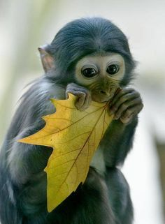 Precious baby primate