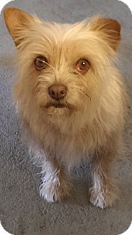01/07/15-~Santa Monica, CA - The Forgotten Dog Foundation, Terrier (Unknown Type, Medium) Mix. Meet Pearl, a dog for adoption. http://www.adoptapet.com/pet/10614259-santa-monica-california-terrier-unknown-type-medium-mix