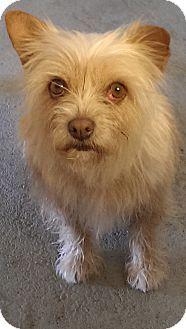 01/07/15-~Santa Monica, CA - The Forgotten Dog Foundation, Terrier (Unknown Type, Medium) Mix. Meet Pearl, a dog for adoption. http://www.adoptapet.com/pet/10614259-santa-monica-california-terrier-unknown-type-medium-mix