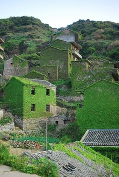 In the mouth of the Yangtze River off the eastern coast of China, a small island holds a secret haven lost to the forces of time and nature–an abandoned fishing village swallowed by dense layers of ivy slowly creeping over every brick and path. Houtou Wan Village is located on Gouqi Island, which belongs to …