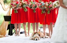 We love this dog's style: from the collar to the pre-wedding nap. photos with dogs 10 Photos of Dogs in Weddings Dog Wedding, Wedding Pics, On Your Wedding Day, Dream Wedding, Wedding Ideas, Fantasy Wedding, Wedding Fun, Fall Wedding, Wedding Colors