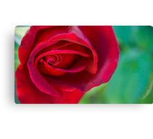 Red Rose Macro Canvas Print