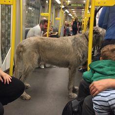 Bahn, Rest, Goats, Animals, Funny Photography, Animales, Animaux, Animal, Animais