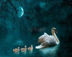 Diamond Painting Swan and Cygnets in the Moonlight Kit Beautiful Swan, Beautiful Birds, Animals Beautiful, Beautiful Life, Beautiful Things, Animal Spirit Guides, Spirit Animal, Animals And Pets, Cute Animals