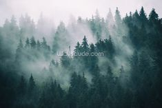 Tree Wallpaper Mural, Forest Wallpaper, Landscape Wallpaper, Photo Wallpaper, Snowy Forest, Forest View, Misty Forest, Forest Landscape, Mountain Landscape