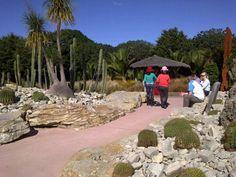 cactus garden at the Botanical Garden. Auckland New Zealand, Palm Springs, Botanical Gardens, Golf Courses, Cactus, Sidewalk, Prickly Pear Cactus, Walkway, Walkways