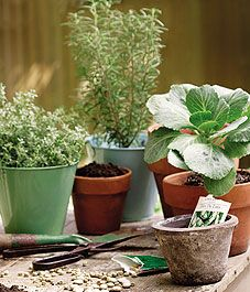 grow veggies in containers...