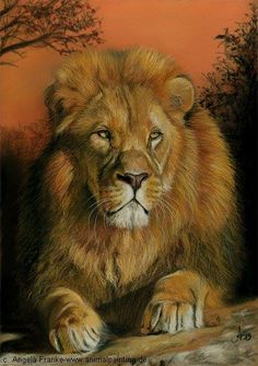 African lion ~ Pastel drawing by Angela Franke