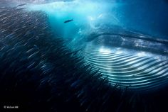 Winners of Wildlife Photographer of the Year 2015 | Nature TTL