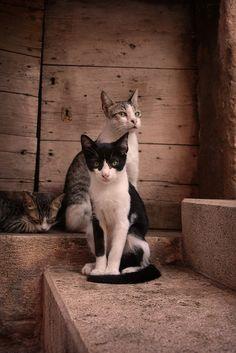 cats by CCCvrcak, via Flickr