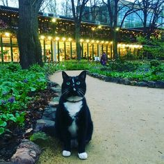 Ботанический сад | Аптекарский огород | ВКонтакте