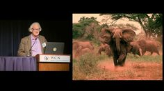 Watch Dr. Iain Douglas-Hamilton's talk about the elephant poaching crisis from the recent Wildlife Conservation Network Expo in San Francisco.