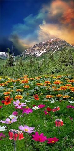MOUNTAINS & WILDFLOWERS - BEAUTY AT ALL LEVELS