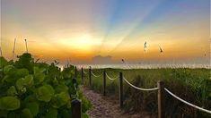 Boca Raton Beach, Us Beaches, South Florida, Modern Contemporary, Landscaping, Sunrise, Ocean, Building, Outdoor