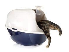 Katzenklo als Schalentoilette oder Haubentoilette - Was ist besser? - http://www.katzenklo-kaufen.de/schalentoilette-oder-haubentoilette/