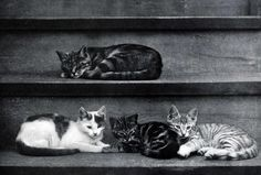 Naptime in Alexander and Some Other Cats, 1929 Harvard Library