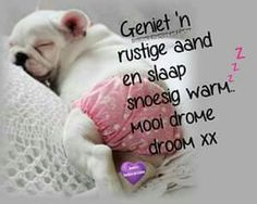 Slaap Good Night Qoutes, Good Night Messages, Night Quotes, Morning Pictures, Morning Pics, Goeie Nag, Good Morning Good Night, Afrikaans, Dog Quotes