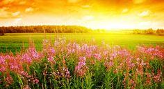 Sunrise Wallpaper For Desktop Computer: Autumn by Free download ...
