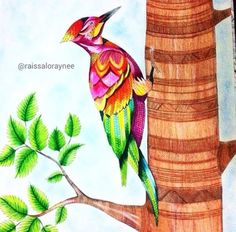 Enchanted Forest Coloring Book Books Adult Colouring Johanna Basford Secret Garden Doodle Art Color Inspiration Animal Kingdom