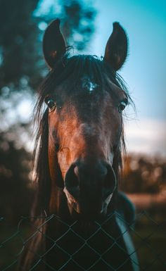 Animal, horse, foal and mammal | HD photo by Marko Blažević (@kerber) on Unsplash