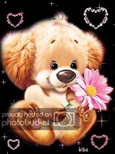 Cute animation picture You are in the right place about GIF estrellas Here we offer you the most beautiful pictures about the GIF wallpaper you are looking for. When you examine the Cute animation pic Bear Pictures, Gif Pictures, Cute Pictures, Beautiful Pictures, Beautiful Gif, Animals Beautiful, Calin Gif, Bisous Gif, Gif Lindos