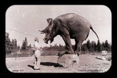 (Seattle Zoopark - 1952)