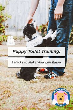 Puppy Toilet Training: 5 Hacks to Make Your Life Easier How to house train a new puppy. Check out these Puppy toilet training tips. 5 hacks to make life easier when potty training your new puppy. Puppy Toilet Training, Leash Training, Puppy Training Tips, Potty Training, Training Your Dog, Training Quotes, Dog Minding, Easiest Dogs To Train, Dog Training Techniques
